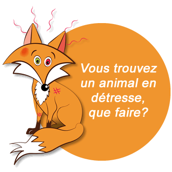 Animal en détresse, que faire? Faune Alfort
